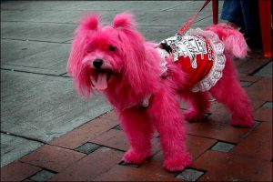 bright pink dog with accessories