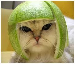 Cat wearing an orange peel on its head