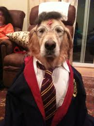 dog dressed up as Harry