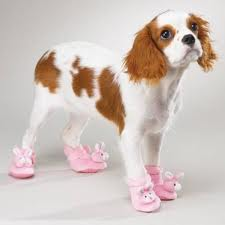 why girls like dogs, shoes and pink